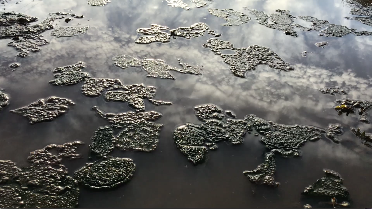 Image is a still from Shelter a video by Minoosh Zomorodinia. Image shows reflective surface of water up close.