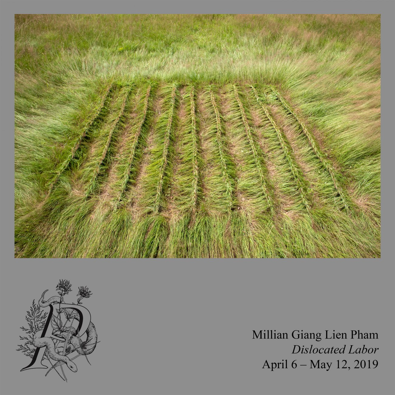 Image of a field of grass, the grass has been braided in vertical rows, creating a square.