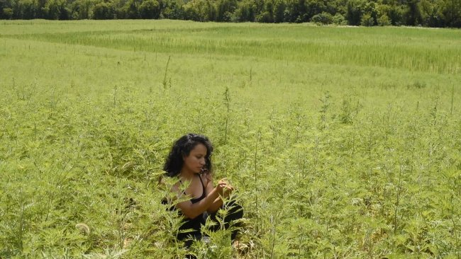 Video still depicting a person crouched in a green field of plants.